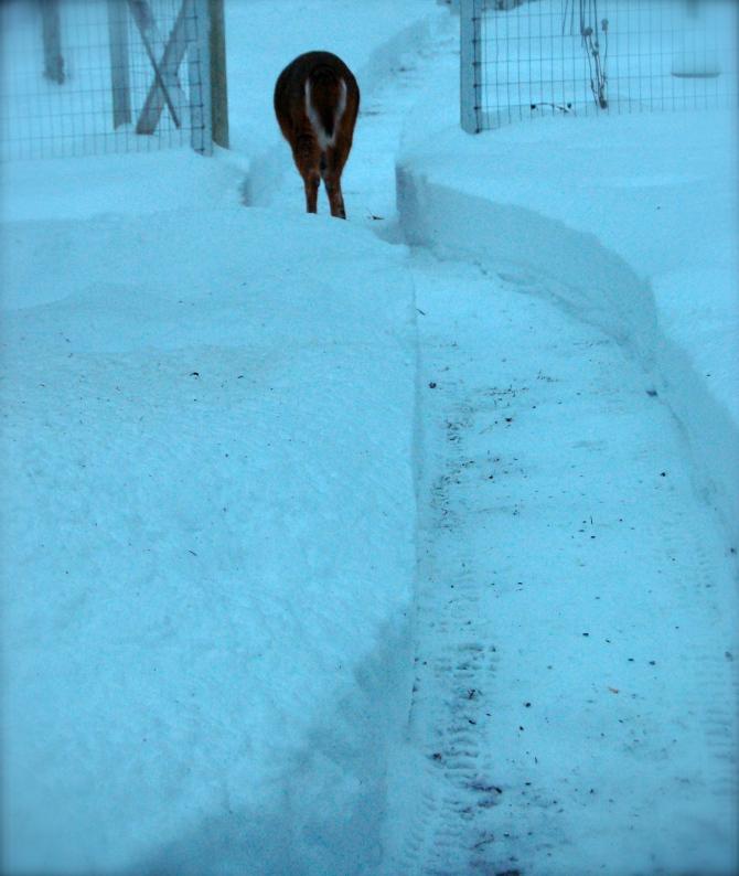 SMITHTOWN SNOW #96